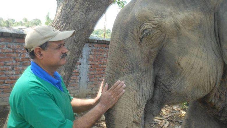 Sarma, dokter gajah