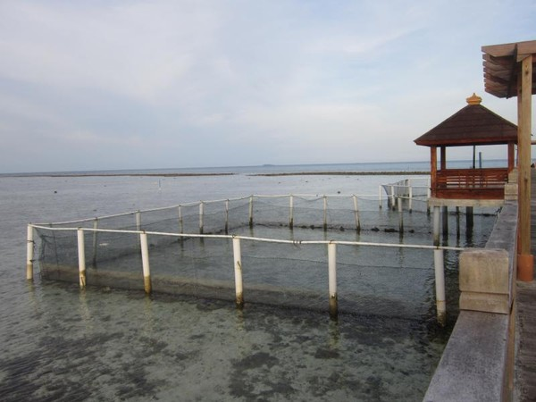 Pulau Pramuka sebagai tempat penangkaran penyu sisik dan hijau. Penyu ini tergolong langka di Indonesia. (Foto: Gema Bayu Samudra/dtraveler)