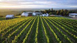Pencuri Gasak 0,5 Ton Anggur Senilai Rp 18,1 Miliar, Petani Bete