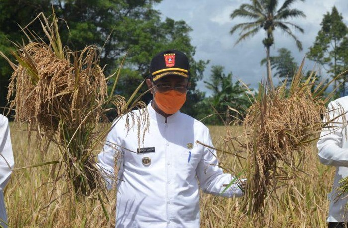 Pasangan Cagub-Cawagub Sumatera Barat Nasrul Abit-Indra Catri (NA-IC) mengaku ingin memberikan perhatian lebih terhadap sektor pertanian.