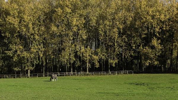 Terkadang warga setempat juga kerap melihat penampakan kereta kuda yang sedang berjalan menuju ke hutan Screaming Woods. Suara kereta kuda itu begitu nyata, demikian juga dengan bunyi lenguhan kuda yang terdengar sepanjang kereta itu berjalan. (Getty Images/iStockphoto/asmithers)