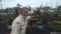 Pameran Bonsai Jadi Alternatif Hiburan Saat Long Weekend di Tengah Pandemi
