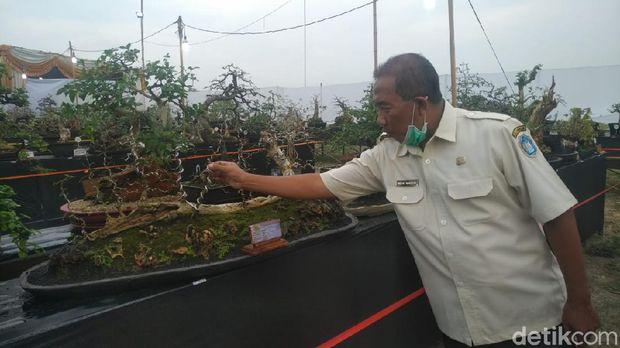 Pameran Bonsai di Lamongan