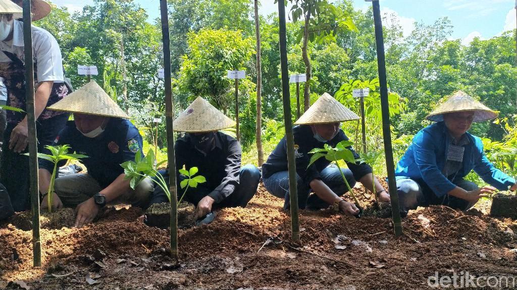 Peringati Sumpah Pemuda, Warga Ciamis Menanam 10 Ribu Pohon Porang