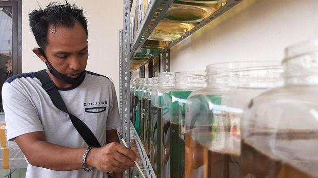 Ronaldo penjual ikan cupang di Palembang (Raja-detikcom)