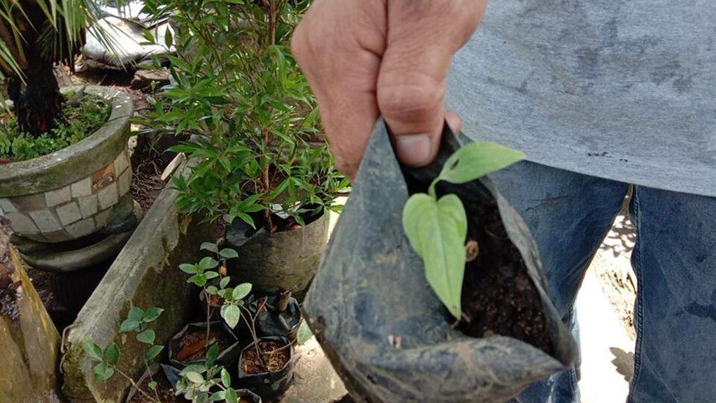 Cerita Janda Bolong, Pelipur Lara Pedagang Bunga Saat Pandemi Corona