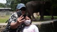 Pengunjung berfoto di kandang gajah.
