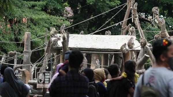 Pengunjung mengamati kera ekor panjang (Macaca fascicularis) koleksi Kebun Binatang Surabaya, Jawa Timur, Kamis (29/10/2020). ANTARA FOTO/Didik Suhartono.