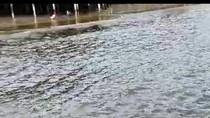 Pantai di Balikpapan Diduga Tercemar Cairan Berbau Solar, Ikan-ikan Kecil Mati