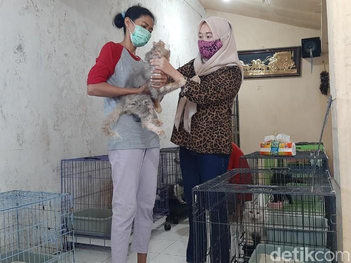 penitipan hewan kucing di kota probolinggo