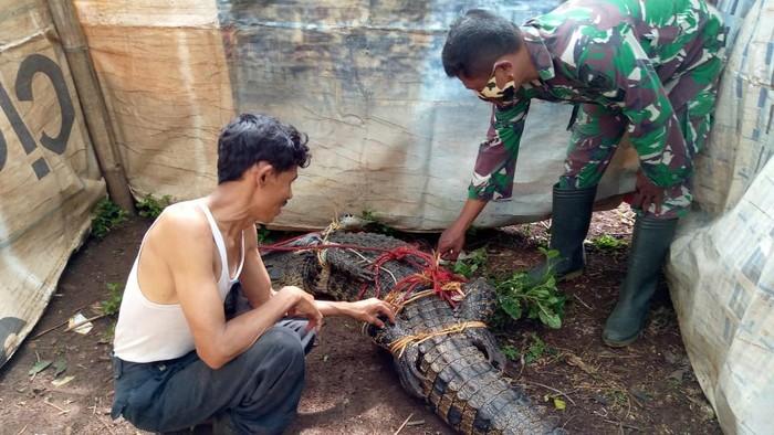 Warga Bogor tangkap buaya berukuran 3 meter.