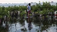 Jakarta Diprediksi Tenggelam 2050, Pakar BRIN: Karena Land Subsidence
