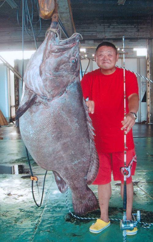 Wow! Penemuan 5 Ikan Kerapu Terbesar di Dunia Ini Bikin Heboh
