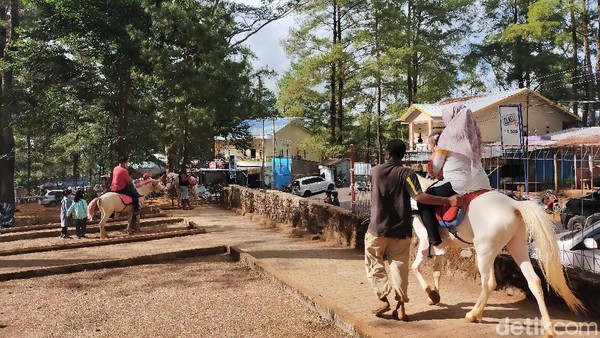 Untuk mencapai Taman Wisata Alam Malino, traveler bisa menggunakan kendaraan mobil pribadi dengan waktu tempuh perjalanan selama 3 jam dari Makassar. Namun disarankan untuk berhati-hati lantaran beberapa jalan menuju lokasi ini rusak dan berlubang. (Ibnu Munsir/detikcom)