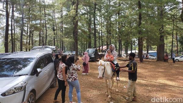 Jangan khawatir buat pengunjung yang belum bisa berkuda. Pasalnya mereka ditemani langsung oleh pemiliknya selama berkuda di hutan pinus. Anak-anak suka dengan wisata naik kuda ini. (Ibnu Munsir/detikcom)
