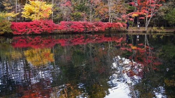 Jepang kini mulai memasuki musim gugur.