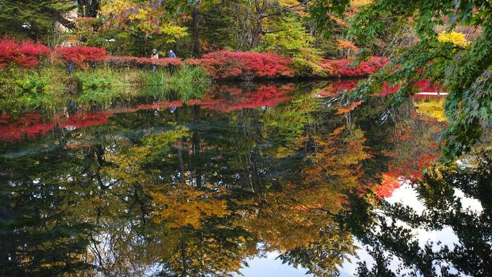 A duck spreads its wings in a pond as fall foliage colors are reflected on the water Tuesday, Oct. 27, 2020, in Nagano, central Japan. (AP Photo/Kiichiro Sato)