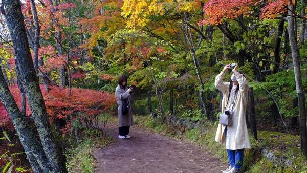 Indahnya gradasi warna musim gugur menjadi pemandangan yang tidak bisa dilewatkan warga sekitar.
