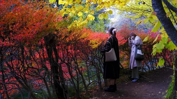 Orang-orang berfoto sambil berjalan di sepanjang jalan setapak di Nagano, barat laut Tokyo, Jepang.