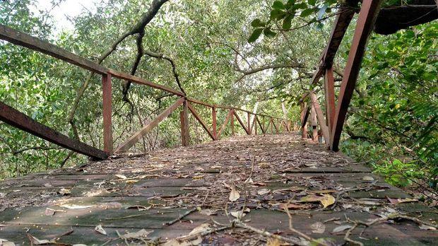 Jembatan hutan mangrove