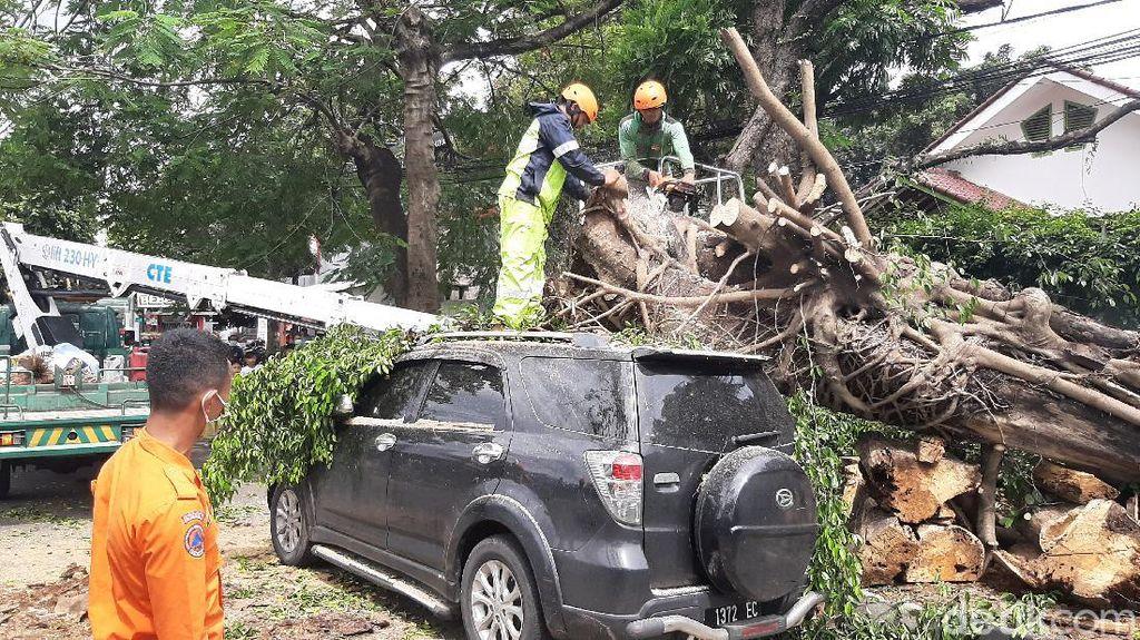 Video Bogor Dilanda Angin Kencang, 4 Pohon Tumbang