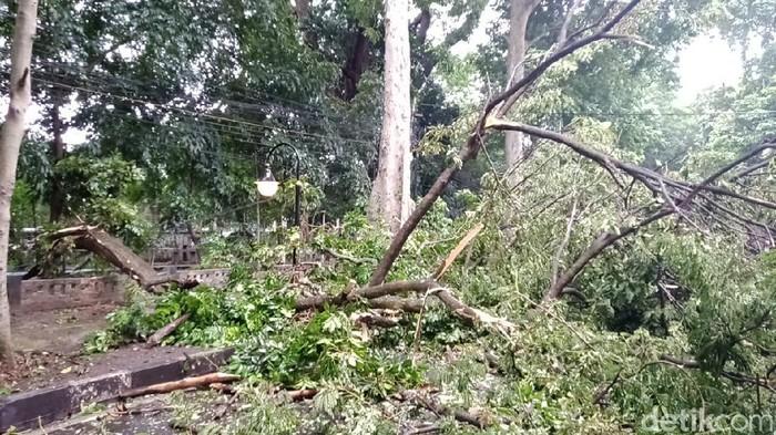 Pohon Tumbang di Bogor