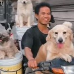 Santuy! Pemotor asal Bali Bonceng 6 Anjing Pakai Motor Bebek Supra