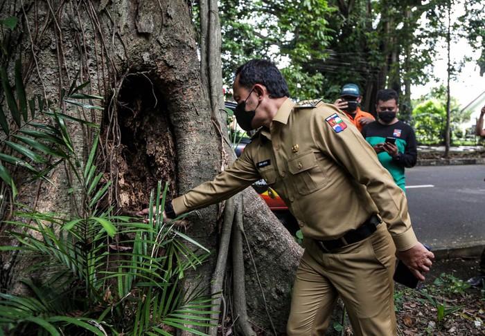 Wali Kota Bogor Bima Arya melakukan pengecekan pohon yang rawan tumbang