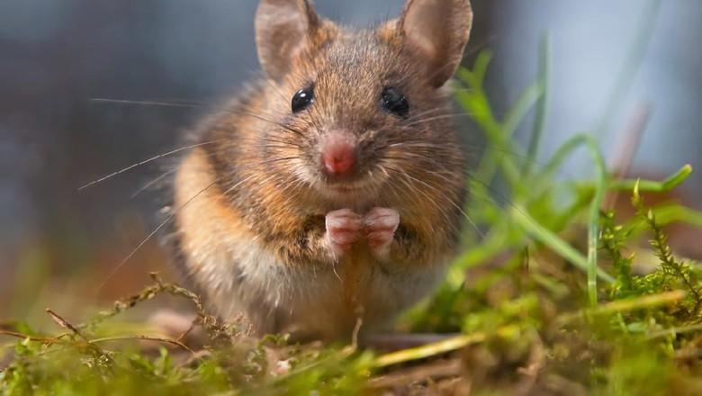 5 Susu Termahal di Dunia, Ada Susu Sapi hingga Susu Tikus