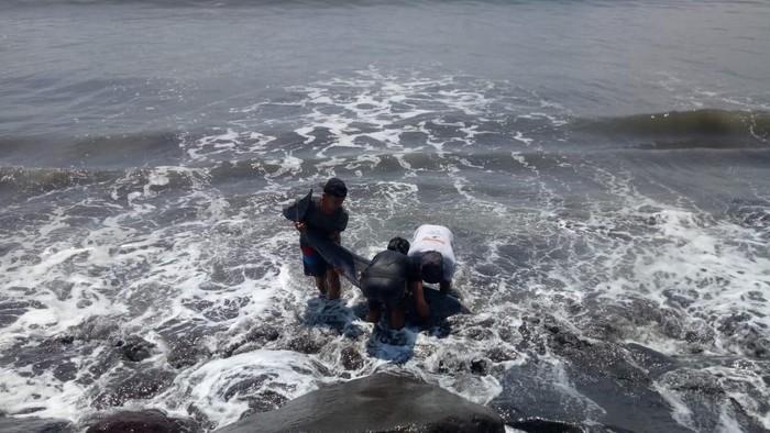 Lumba-lumba ditemukan terdampar di Pantai Padang Galak dan mengalami luka-luka (dok BKSDA Bali)