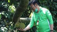 Mimpi RI Jadi Rajanya Durian di Pasar Dunia