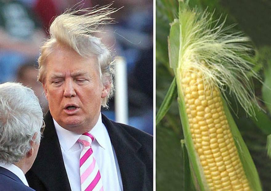 5 Makanan Mirip Donald Trump, dari Snack Kulit Babi hingga Pancake