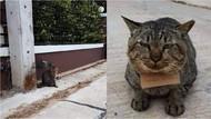 Gemas! Hilang 3 Hari, Kucing Ini Pulang Bawa Catatan Utang Ikan