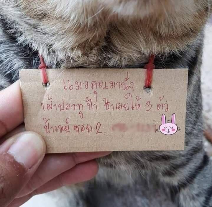 Hilang 3 Hari, Kucing Ini Pulang Bawa Catatan Utang Ikan