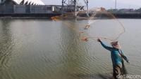 Salah seorang pemancing bernama Iman (28), datang ke Embung Gedebage sengaja untuk mencari ikan. Cari ikan, kebetulan kerja lagi libur, ya jadi berkegiatan aja. Kerja ya kerja, ini mah buat mengisi waktu libur saja, ujar Iman. (Wisma Putra/detikcom)
