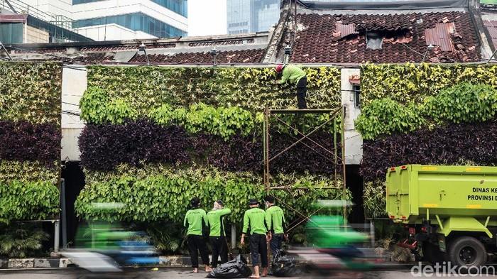 Petugas Dinas Kehutanan Jakarta Pusat melakukan perawatan taman vertikal (vertical garden) di Jl Menteng, Kamis (5/11/2020). Taman vertikal yang mengandalkan sistem hidroponik tersebut menjadi alternatif taman di lahan sempit perkotaan.