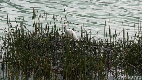 Bukan danau biasa, Linow punya ciri khas tersendiri. Danau Linow memiliki air yang berwarna hijau.