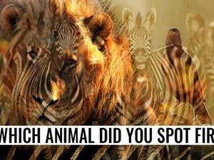 Tes Kepribadian: Zebra atau Singa yang Pertama Kali Kamu Lihat Dalam Gambar?