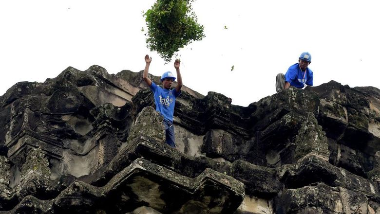 This photo taken on October 12, 2020 shows a gardener throwing down tree saplings removed from the exterior of the Angkor Wat temple in Siem Reap province. - Stacking a ladder against the towering spires of Cambodias archaeological marvel Angkor Wat, a crack team of gardeners gingerly scales the temples exterior to hack away foliage before it damages the ancient facade. (Photo by TANG CHHIN Sothy / AFP) / TO GO WITH Cambodia-archaeology-culture-conservation, FEATURE by Suy SE