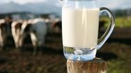 Aneh bin Ajaib! Startup Ini Sukses Bikin Susu Tanpa Sapi Perah