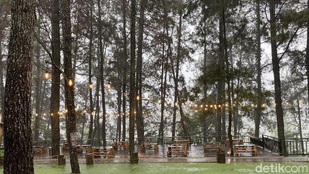 Ngopi Kekinian Ditemani Panorama Hutan Pinus