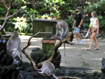 5 Destinasi Wisata Menarik di Gianyar, Bali Kuy!