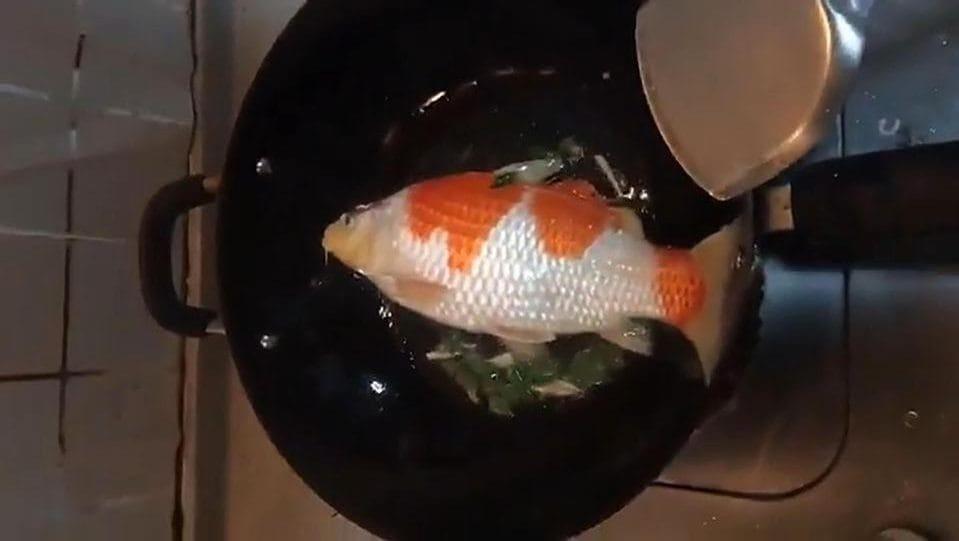 Harganya Jutaan Rupiah, 5 Ikan Hias Ini Malah Digoreng