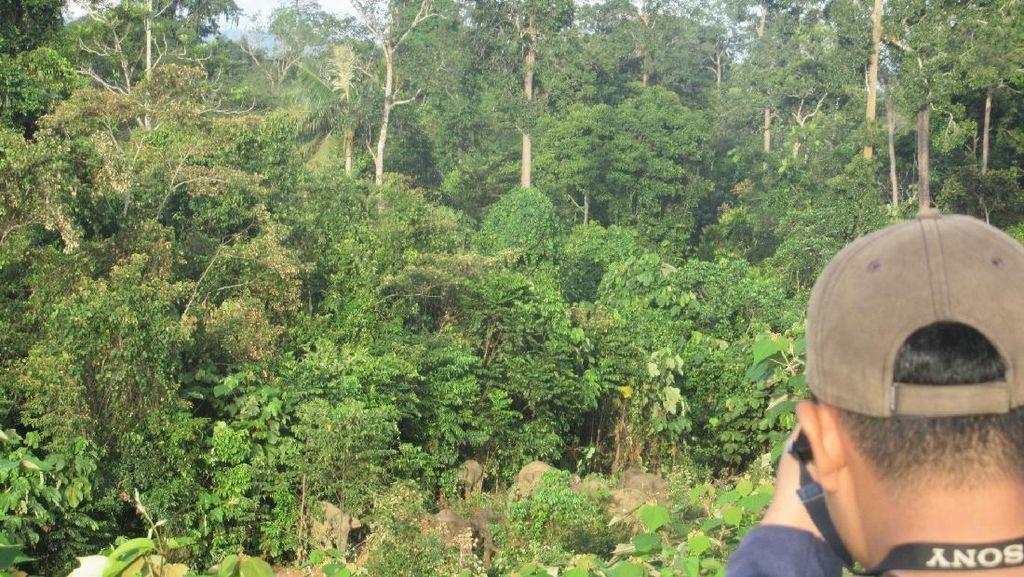 Upaya Pelestarian Ekosistem dan Satwa Liar