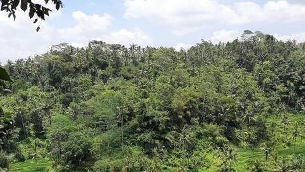 Agrowisata Kamulilir di Bali