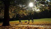 Keindahan musim gugur tidak dilewatkan oleh warga sekitar untuk menikmatinya. Owen Humphreys/PA via AP.