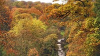 Pepohonan yang berubah warna dan dedaunan yang berguguran menambah kecantikan hutan-hutan di Inggris. Owen Humphreys/PA via AP.