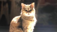Selamat Jalan Gli, Kucing Penjaga Hagia Sophia