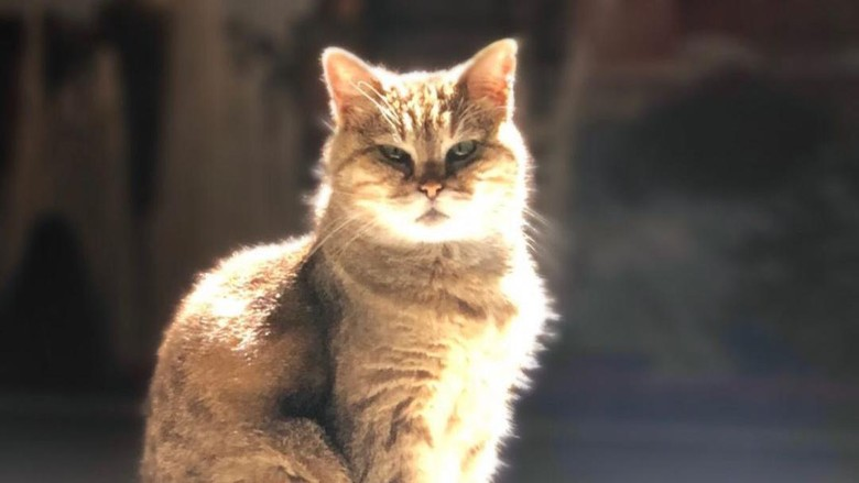 Gli, kucing penjaga Hagia Sophia