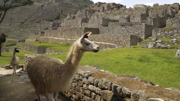 Machu Picchu merupakan peninggalan Kerajaan Inca, yang masuk daftar Situs Warisan Dunia UNESCO sejak tahun 1983.